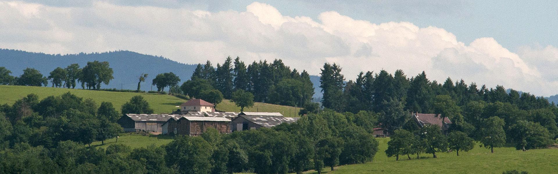 Le GAEC Salles éleveur de charolais au cœur de l'Allier